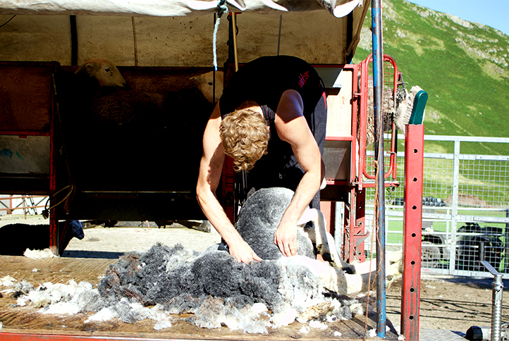 Insulation, the solution to our mountain of wool?